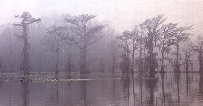 Caddo Lake scene photographed by Bob Metzler